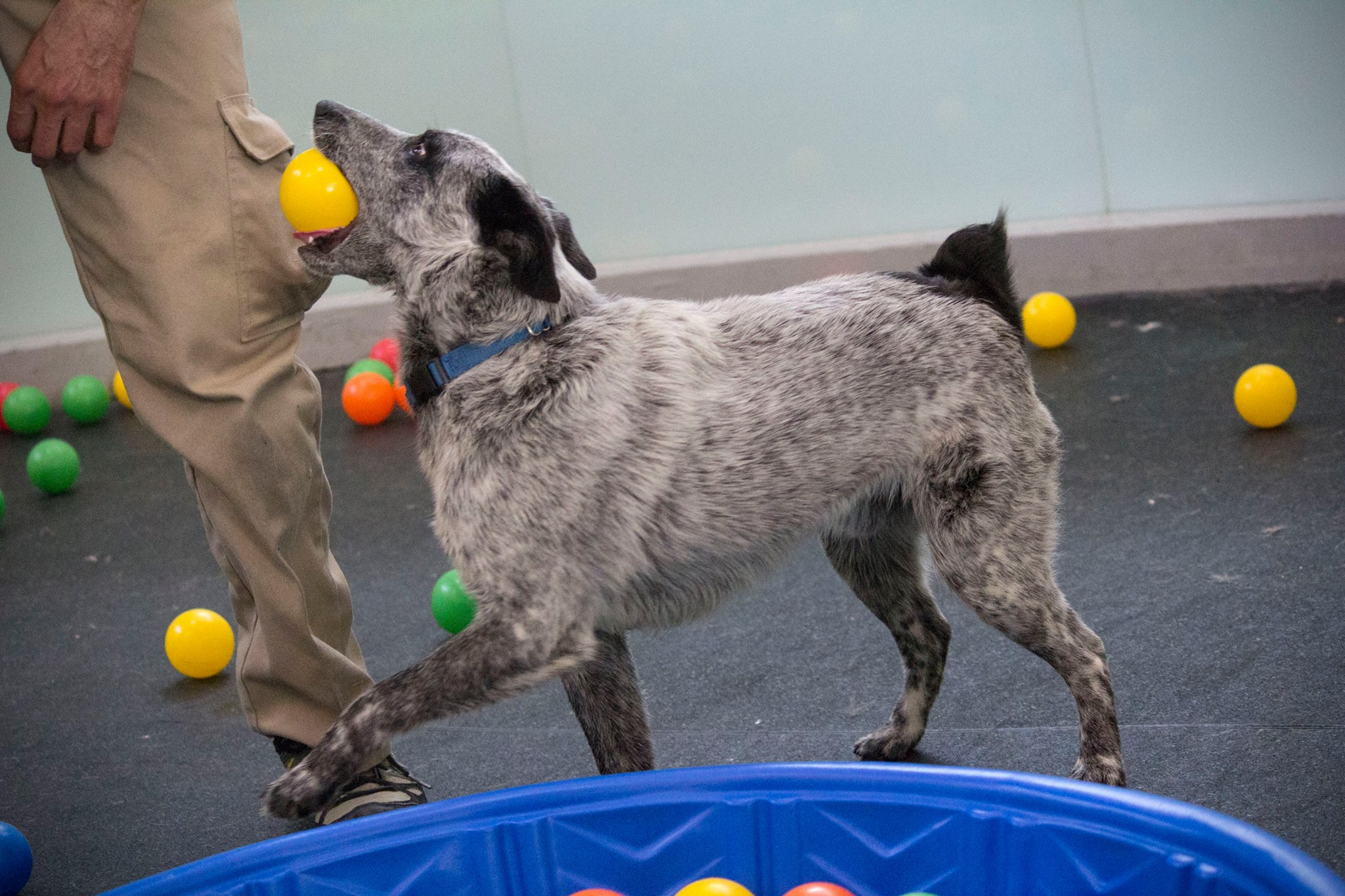 Shelter Animals Get Surprised with Their Own Ball Pit